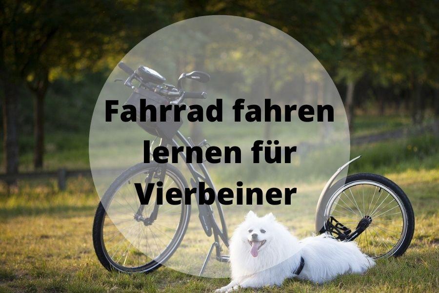 Fahrrad Hund