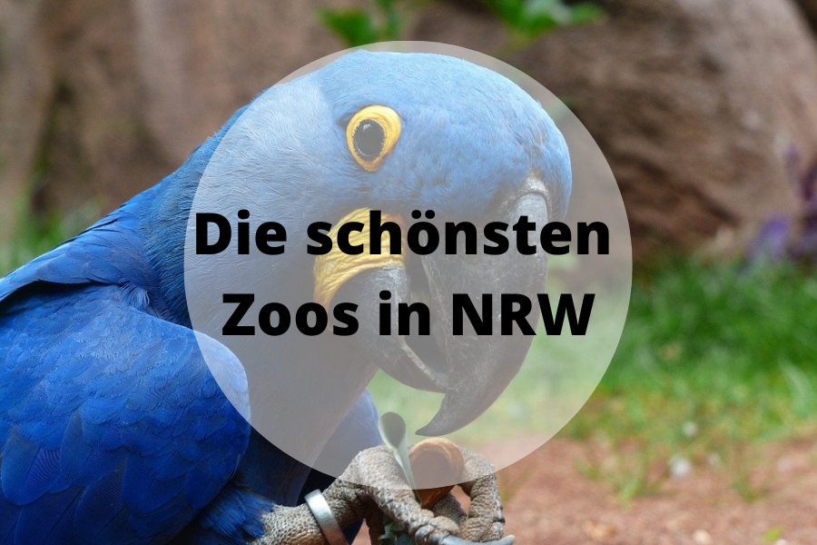Die schönsten Zoos in NRW